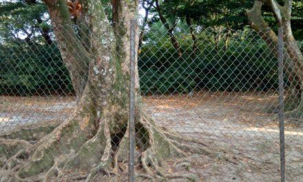 Protection environnementale : Modèle écologique de l'Evêché d'Idiofa !