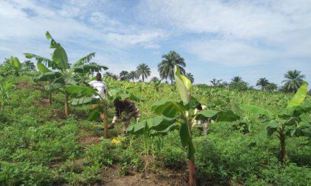 La caritas Idiofa s'investit pour un développement par l'agriculture!
